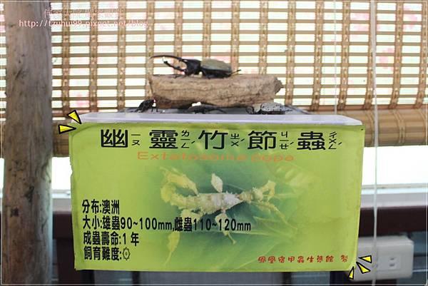 宜蘭鳳凰宿民宿甲蟲生態體驗館 23.JPG