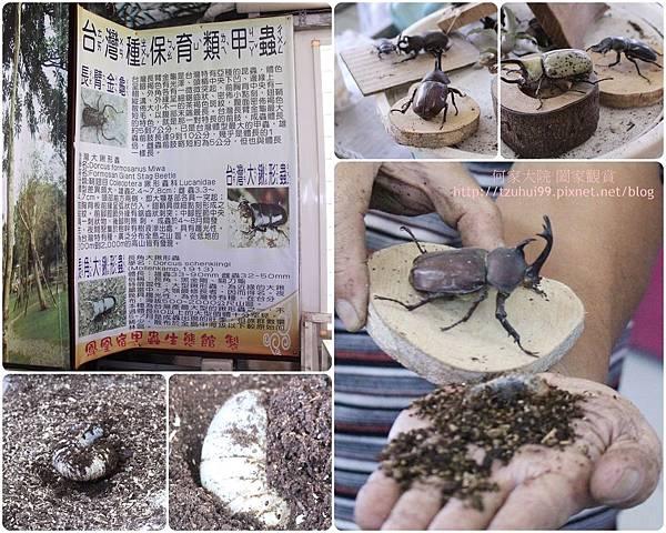 宜蘭鳳凰宿民宿甲蟲生態體驗館 26.jpg