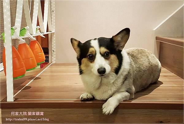 林口eat enjoy意享美式廚房(林口三井店) 13.jpg