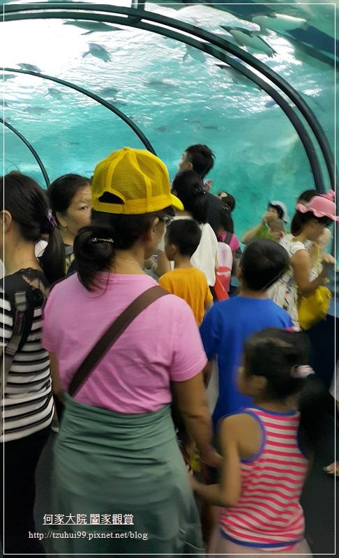 大陸珠海長隆海洋王國 21.jpg