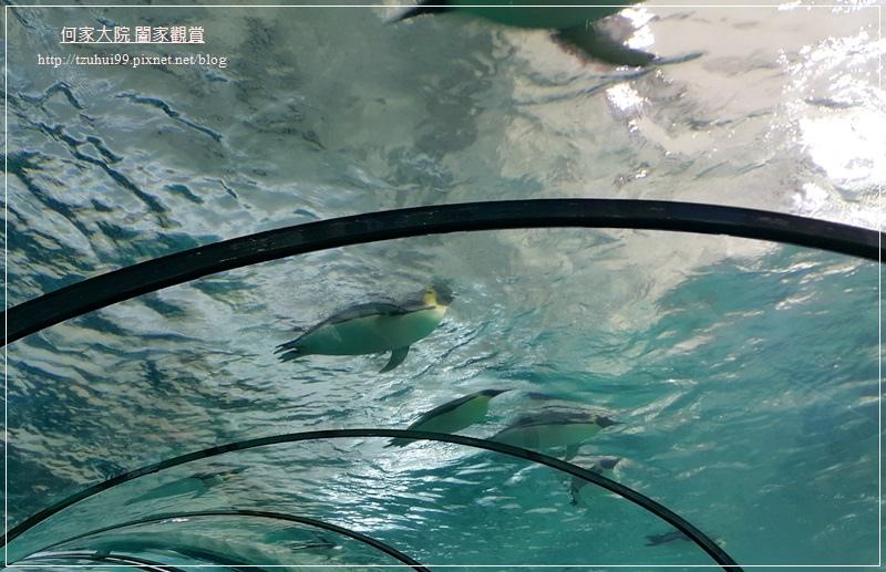 大陸珠海長隆海洋王國 22.jpg