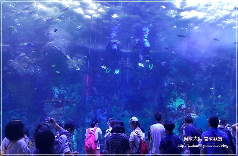 大陸珠海長隆海洋王國 30.jpg