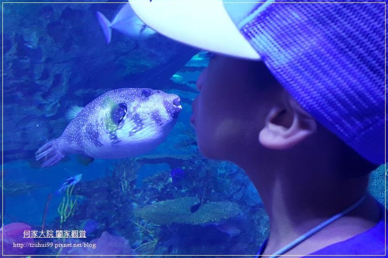 大陸珠海長隆海洋王國 31.jpg