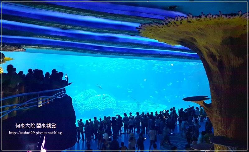 大陸珠海長隆海洋王國 35.jpg