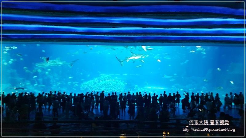 大陸珠海長隆海洋王國 36.jpg