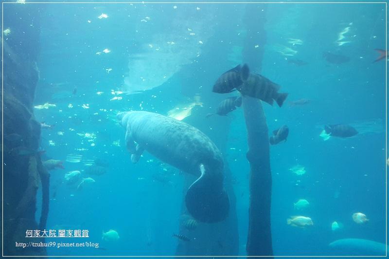 大陸珠海長隆海洋王國 40.jpg