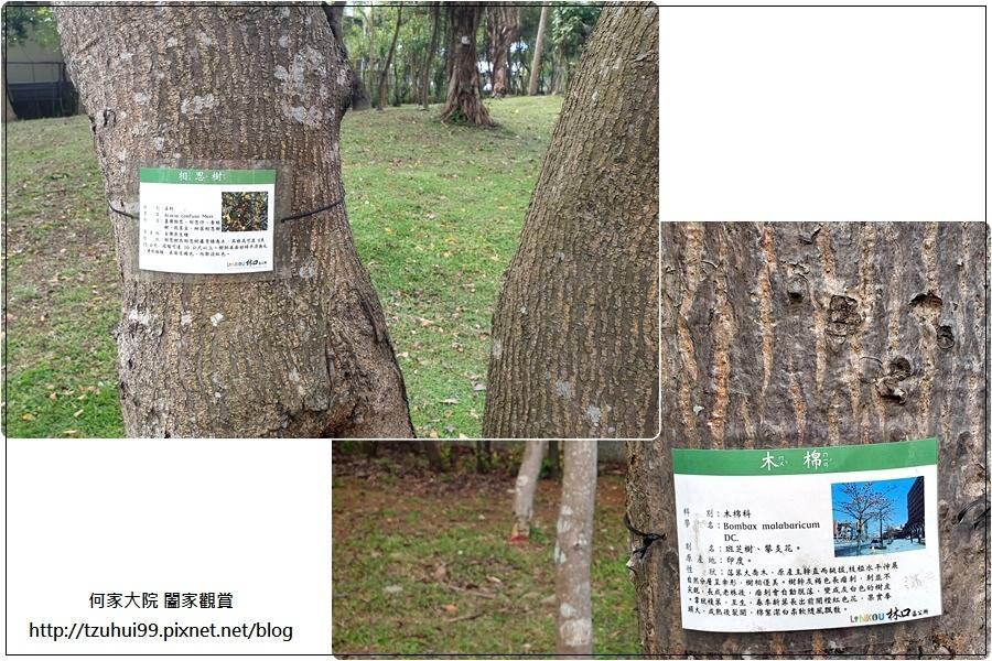 林口樂活公園(捷運車廂公園)特色公園+共融公園+特色溜滑梯 05.jpg