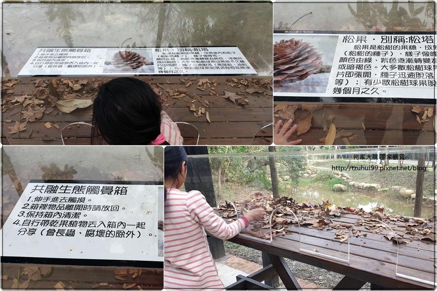 林口樂活公園(捷運車廂公園)特色公園+共融公園+特色溜滑梯 18.jpg