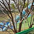 林口足夢運動公園(兒童足球場+超長溜滑梯+攀岩場+攀爬網)滯洪池公園 10.jpg