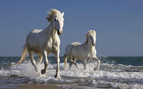 www.horsebreedsinfo.com
