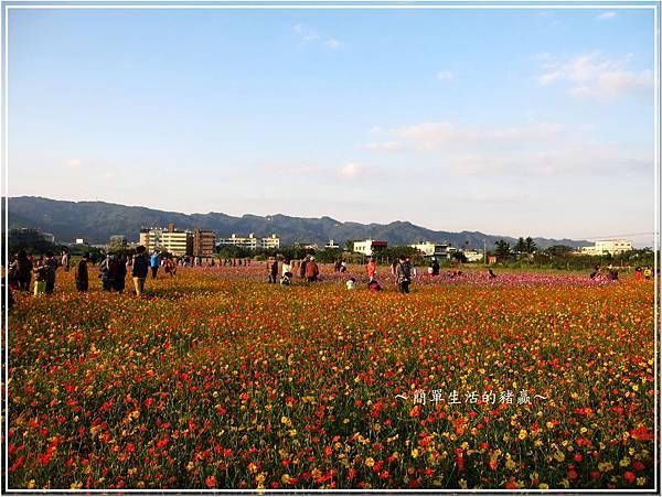 20131201 樹林花海01