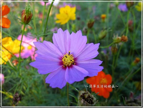 20131201 樹林花海03