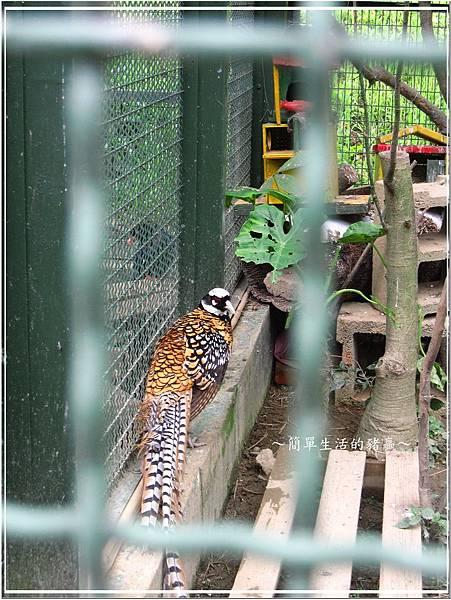 20140503 森林鳥花園13