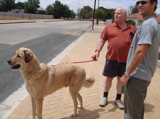 出去時遇到附近住戶與大狗瑪利