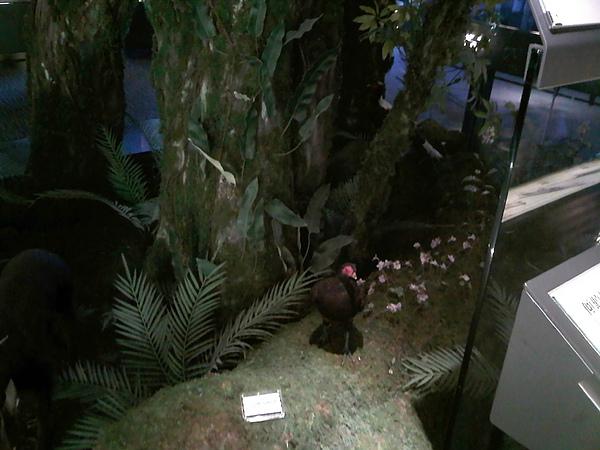 館內的生態模型