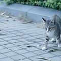 猫は猫でも