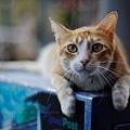 Cat in the street 通り猫