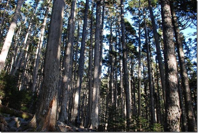 黑森林0260