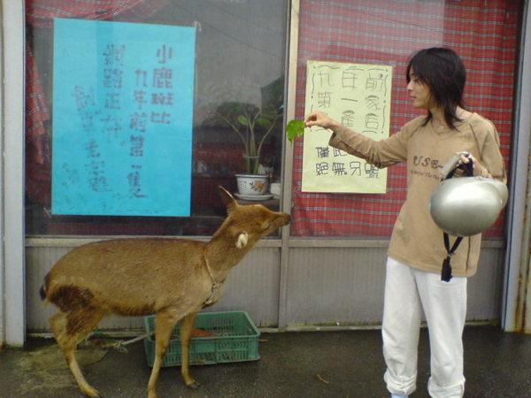 梅花鹿and阿飄