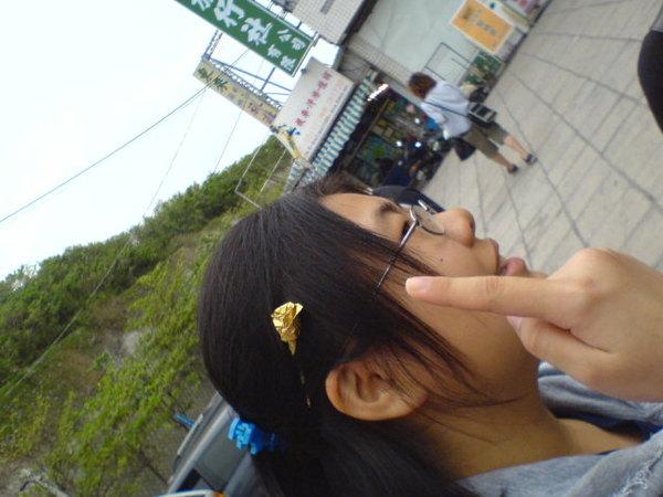 小黃+金莎花