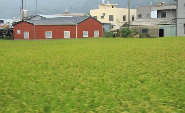 騎芋季,棗幸福 292 (950x580).jpg
