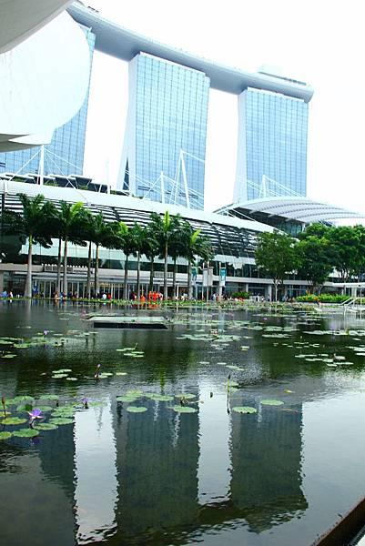 20131227~30新加坡四日自由行 219 (683x1024).jpg