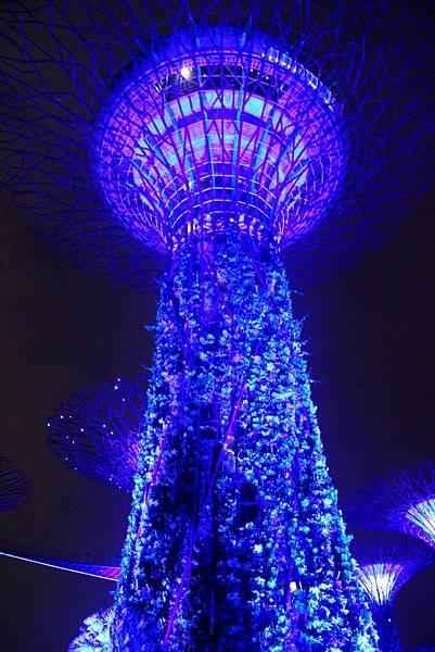20131227~30新加坡四日自由行 576 (683x1024).jpg