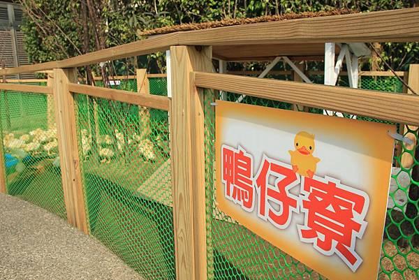 黃色小鴨游基隆 091 (1024x683).jpg