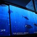 基隆海洋博物館 044 (1024x683).jpg