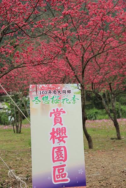 宜蘭大同櫻花季 146 (683x1024).jpg