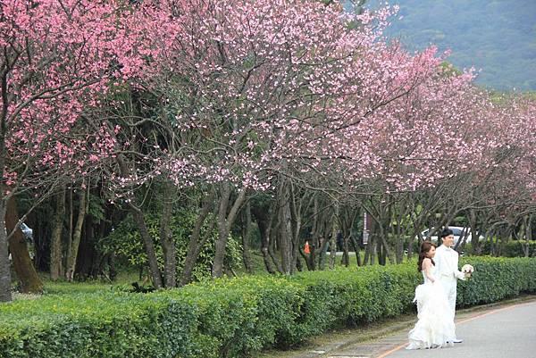 2014陽明山花季 014 (1024x683).jpg