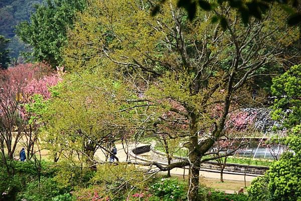 2014陽明山花季 032 (1024x683).jpg