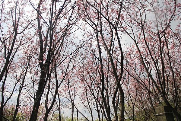 2014陽明山花季 055 (1024x683).jpg