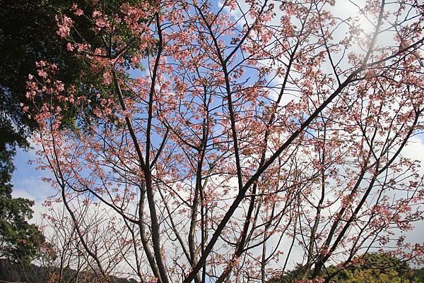 2014陽明山花季 069 (1024x683).jpg