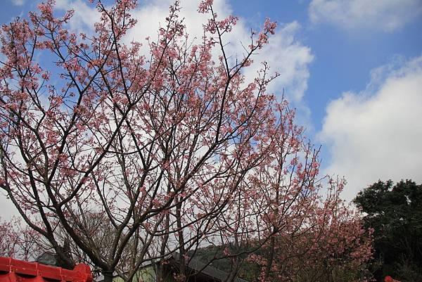 2014陽明山花季 091 (1024x683).jpg