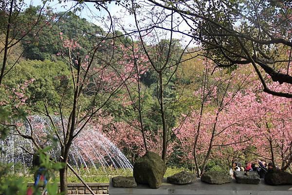 2014陽明山花季 103 (1024x683).jpg