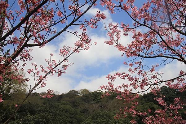 2014陽明山花季 109 (1024x683).jpg