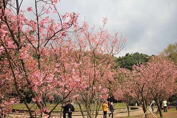 2014陽明山花季 155 (1024x683).jpg