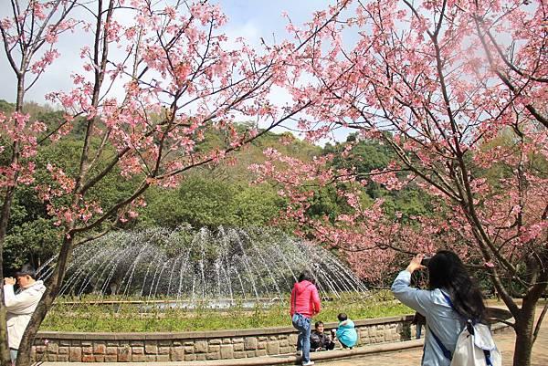2014陽明山花季 168 (1024x683).jpg