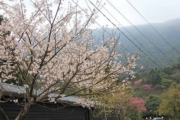 2014陽明山花季 194 (1024x683).jpg