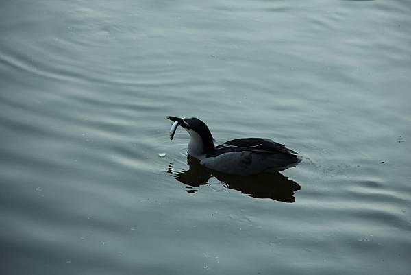 新竹靜心湖 043 (1024x683).jpg