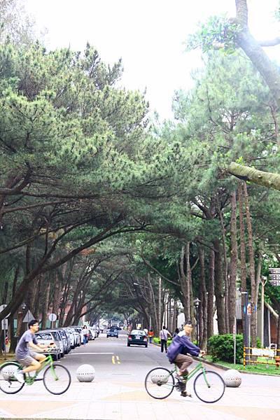 2014桃園油桐花開蘿莎會館 035 (533x800).jpg