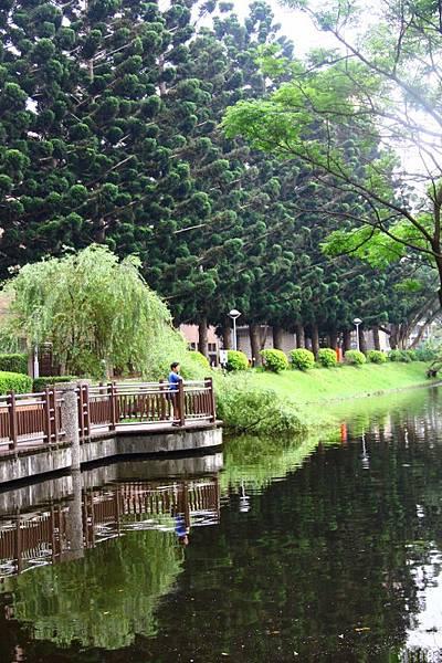 2014桃園油桐花開蘿莎會館 057 (533x800).jpg