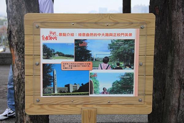2014桃園油桐花開蘿莎會館 105 (800x533).jpg