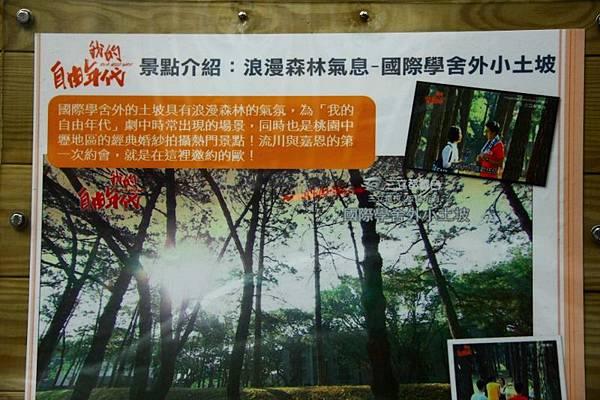 2014桃園油桐花開蘿莎會館 187 (800x533).jpg