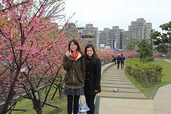 內湖樂湖公園櫻花 003 (1024x683).jpg