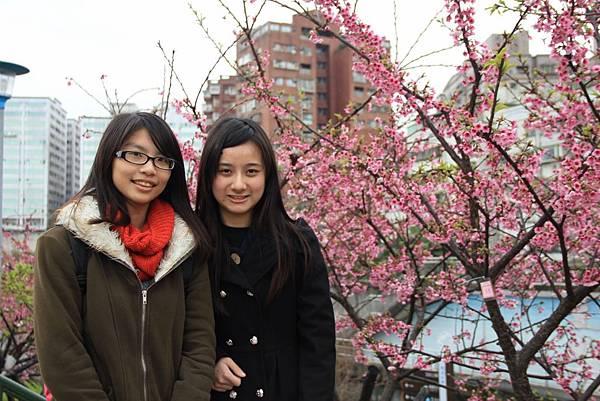 內湖樂湖公園櫻花 005 (1024x683).jpg