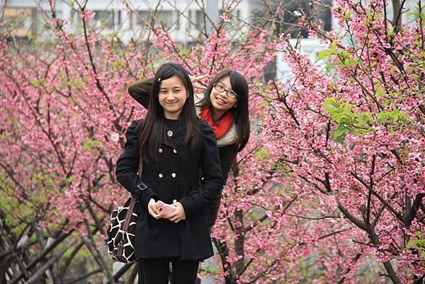 內湖樂湖公園櫻花 016 (1024x683).jpg