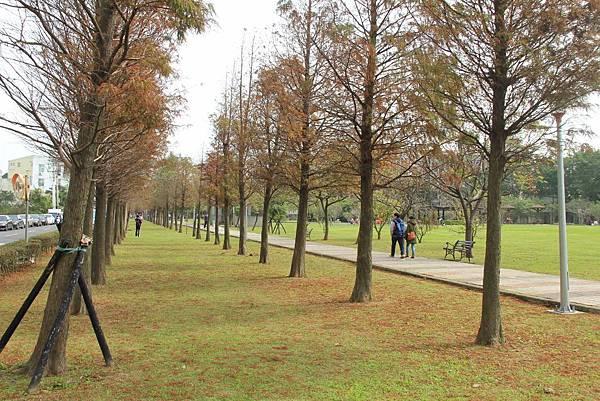 玉山公園落羽松 001 (1024x683).jpg