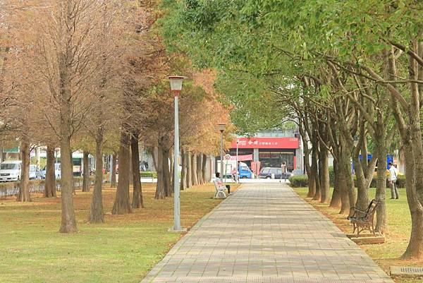 玉山公園落羽松 008 (1024x683).jpg